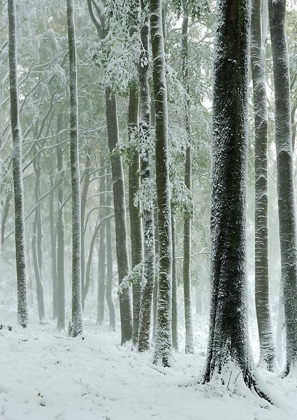 Purkartický les